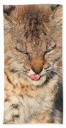 Young Bobcat 02 Bath Towel