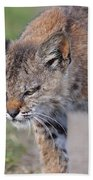 Young Bobcat 03 Bath Towel
