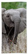 Young Elephant In The Light, Africa Wildlife Hand Towel