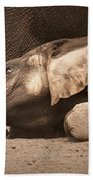 Young Elephant Lying Down Bath Towel