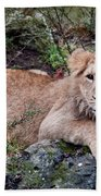 Young Lion  Bath Towel