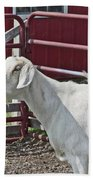 Young Old Goat White And Grayish Red Fence And Gate Barn In Close Proximity 2 9132017 Bath Towel