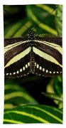Zebra Longwing Butterfly On A Sanchezia Nobilis Tropical Plant Bath Towel