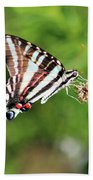 Zebra Swallowtail Butterfly In Garden 2016 Bath Towel