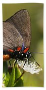 Great Purple Hairstreak Bath Towel