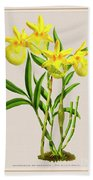 Orchid Vintage Print On Colored Paperboard Bath Towel
