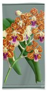 Orchid Vintage Print On Tinted Paperboard Bath Towel