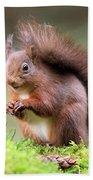 Red Squirrel Sciurus Vulgaris Bath Towel