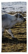 Svalbard Reindeer Hand Towel