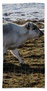 Svalbard Reindeer Bath Towel