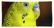 Portrait Of Budgie Birds Bath Towel