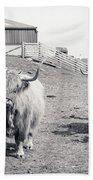 Highland Cattle  Bath Towel