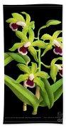 Vintage Orchid Print On Black Paperboard Bath Towel