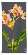 Orchid Old Print Bath Towel