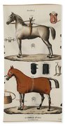 A Chromolithograph Of Horses With Antique Horseback Riding Equipments   1890  Bath Towel