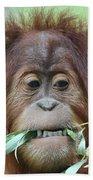 A Close Portrait Of A Young Orangutan Eating Leaves Bath Towel