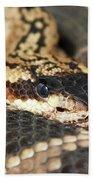 A Close Up Of A Mojave Rattlesnake Bath Towel