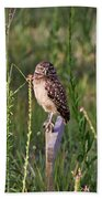 Adult Burrowing Owl Hand Towel