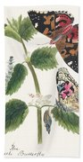 Antique Watercolor Illustration Of Nettle Butterfly In Various Life Stages Published In 1824 By M.p. Hand Towel