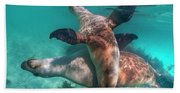 Australian Sea Lion Pair, Coral Coast Hand Towel