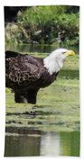 Bald Eagle's Look Bath Towel