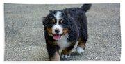 Bernese Mountain Dog Puppy 2 Bath Towel