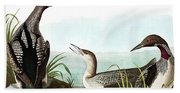 Black Throated Diver, Colymbus Arcticus By Audubon Hand Towel