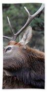 Bull Elk Grooms Himself Bath Towel