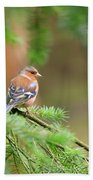 Common Chaffinch Fringilla Coelebs Bath Towel