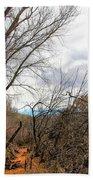 Cottonwood Arizona Jail Trail Trees Path Sky Clouds 5229 Hand Towel