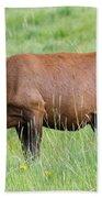 Cow Elk Grazing Bath Towel