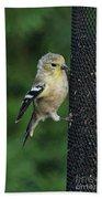 Cute Goldfinch At Feeder Bath Towel