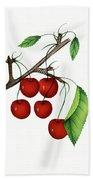 Early Richmond Cherries Hand Towel
