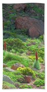 Field Of Echium Wildpretii In The Teide National Park Bath Towel