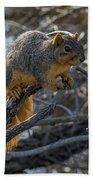 Fox Squirrel - 8988 Bath Towel