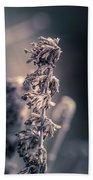 Garden In Winter Hand Towel by Allin Sorenson