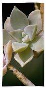 Ghost Plant Bath Towel by Dale Kincaid