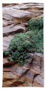 Growing From The Rock Terrain In Zion  Bath Towel