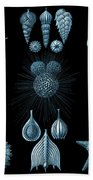 Haeckel Thalamphora Bath Towel by Joy McKenzie