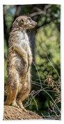 Meerkat Alert Bath Towel by Kate Brown