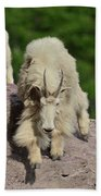 Mountain Goats- Nanny And Kid Hand Towel