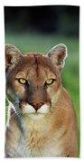 Mountain Lion Felis Concolor, Portrait Bath Towel