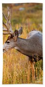 Mule Deer Buck In Rocky Mountain National Park Bath Towel