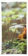 Orange Frog. Hand Towel