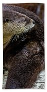 Otter Interrupted Bath Towel by Kate Brown