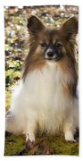 Papillon Sitting In Leaves Bath Towel