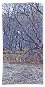 Prescott Arizona Watson Lake Bayou Trees Scrub Water Grasses 3142019 4916 Hand Towel