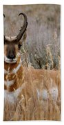 Pronghorn In The Sage Bath Towel
