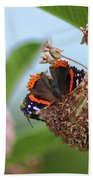 Red Admiral Butterfly On Milkweed Hand Towel