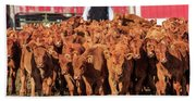 Red Angus Calves Hand Towel